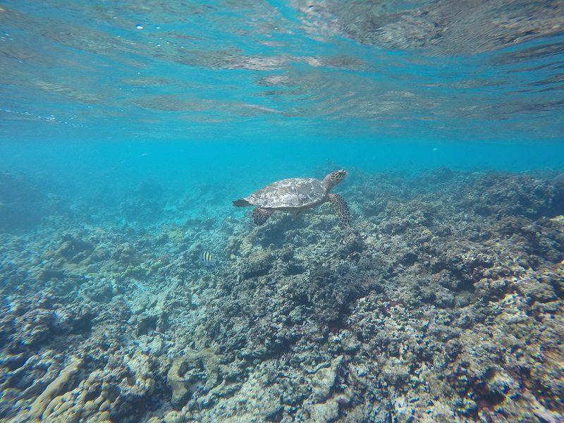 under the sea Seychelles
